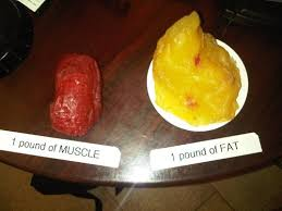 picture FAT vs Muscle