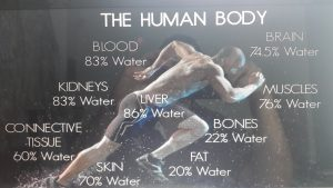 Hydration and the body